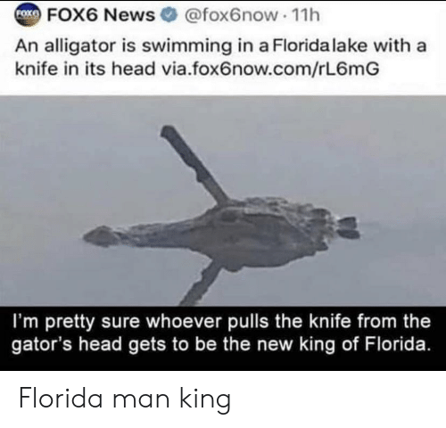 Florida Man, Head, and News: FOX6 News @fox6now 1h  FOXE  An alligator is swimming in a Florida lake with a  knife in its head via.fox6now.com/rL6mG  I'm pretty sure whoever pulls the knife from the  gator's head gets to be the new king of Florida. Florida man king