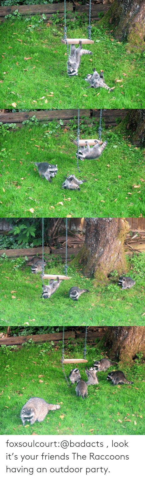 Party: foxsoulcourt:@badacts , look it's your friends The Raccoons having an outdoor party.