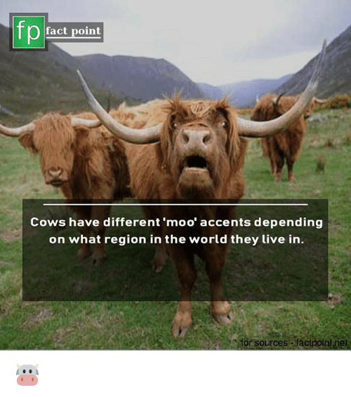 Memes, Live, and World: fp  fact point  Cows have different 'moo' accents depending  on what region in the world they Live in.  for sources alact 🐮