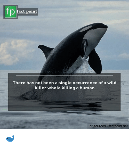 Memes, Wild, and Single: fp  fact point  There has not been a single occurrence of a wild  killer whale killing a human  for sources-factpoint.net 🐋