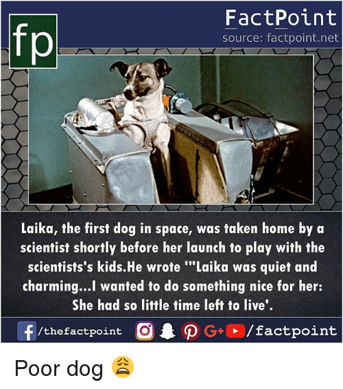 "Memes, Taken, and Home: fp  FactPoint  source: factpoint.net  Laika, the first dog in space, was taken home by a  scientist shortly before her launch to play with the  scientists's kids.He wrote ""Laika was quiet and  charming...l wanted to do something nice for her:  She had so little time left to live'.  f /the factpoint  CAO G+  / factpoint Poor dog 😩"