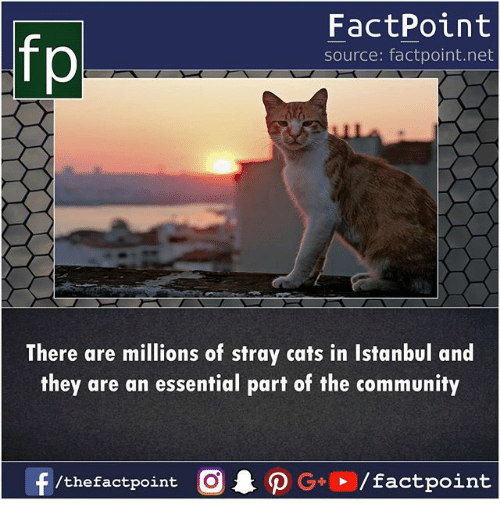 Cats, Community, and Memes: fp  FactPoint  source: factpoint.net  There are millions of stray cats in Istanbul and  they are an essential part of the community