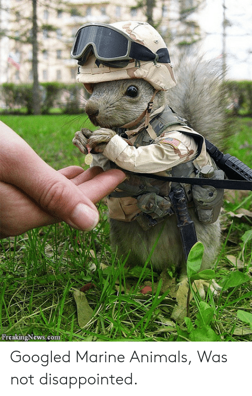 Was Not Disappointed: FrcakingNews.com Googled Marine Animals, Was not disappointed.
