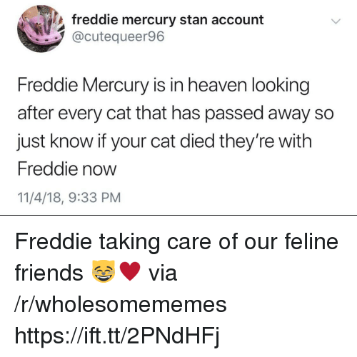 Friends, Heaven, and Stan: freddie mercury stan account  @cutequeer96  Freddie Mercury is in heaven looking  after every cat that has passed away so  just know if your cat died they're with  Freddie now  11/4/18, 9:33 PM Freddie taking care of our feline friends 😸♥️ via /r/wholesomememes https://ift.tt/2PNdHFj