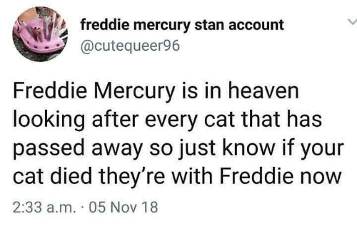 Heaven, Stan, and Mercury: freddie mercury stan account  @cutequeer96  Freddie Mercury is in heaven  looking after every cat that has  passed away so just know if your  cat died they're with Freddie now  2:33 a.m. 05 Nov 18