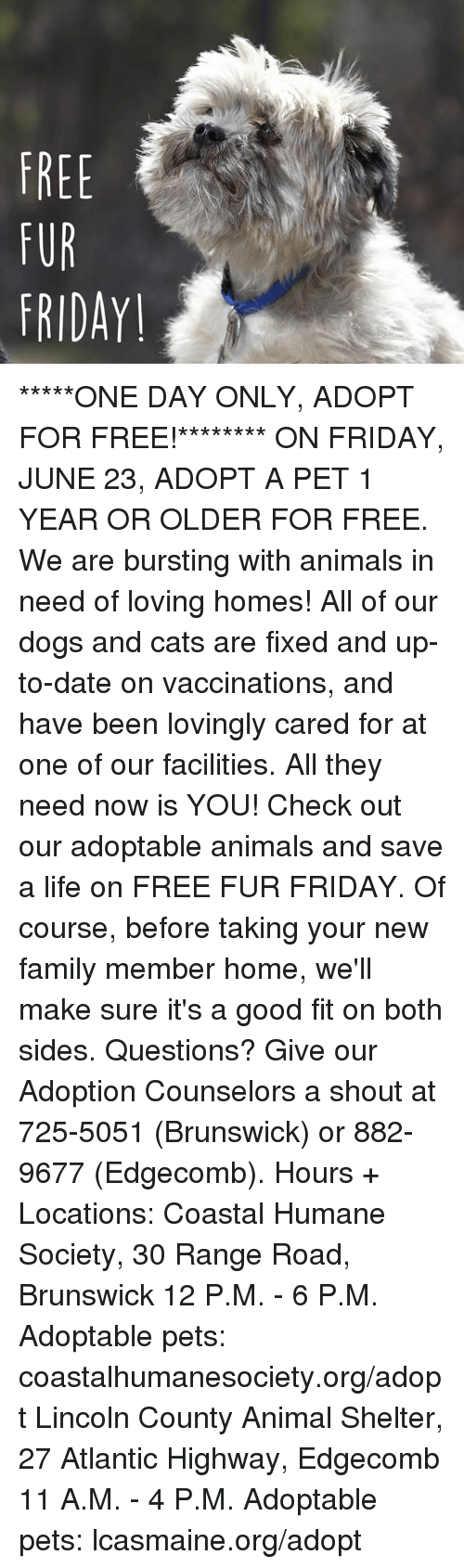 give views for or against the statement every home should adopt a pet animal Mission statement mutt love rescue is with years of animal and rescue find a companion who will thrive in your home we are here to assist you in every way.