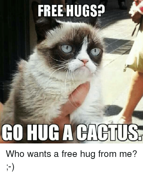 free hug: FREE HUGS?  CO HUG A CACTUS Who wants a free hug from me? ;-)