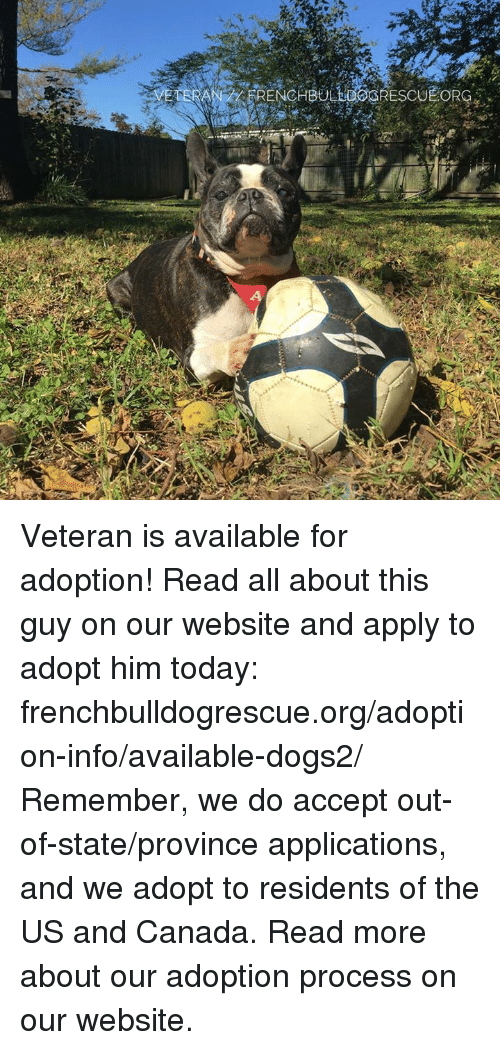 Memes, 🤖, and Him: FRENCHBULLGOGRESCU  EORG  4 Veteran is available for adoption! Read all about this guy on our website <location, likes, dislikes> and apply to adopt him today: frenchbulldogrescue.org/adoption-info/available-dogs2/  Remember, we do accept out-of-state/province applications, and we adopt to residents of the US and Canada. Read more about our adoption process on our website.