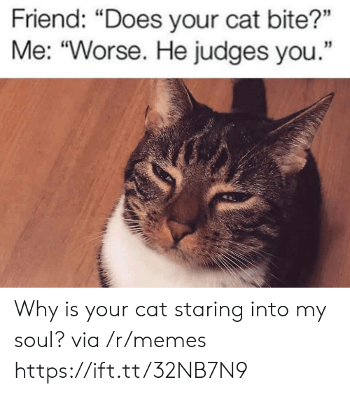 "Judges: Friend: ""Does your cat bite?""  Me: ""Worse. He judges you. Why is your cat staring into my soul? via /r/memes https://ift.tt/32NB7N9"