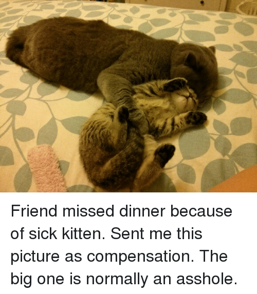 the big one: Friend missed dinner because of sick kitten. Sent me this picture as compensation. The big one is normally an asshole.