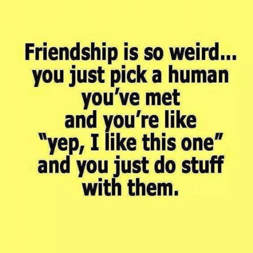 "Dank, Weird, and Stuff: Friendship is so weird...  you just pick a humarn  you've met  and you're like  ""yep, I like this one""  and you just do stuff  with them."