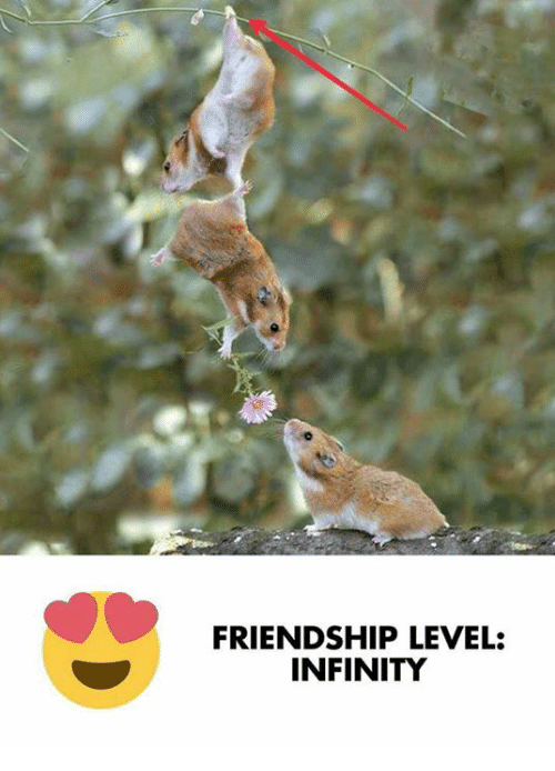 Memes, Infinity, and Friendship: FRIENDSHIP LEVEL:  INFINITY