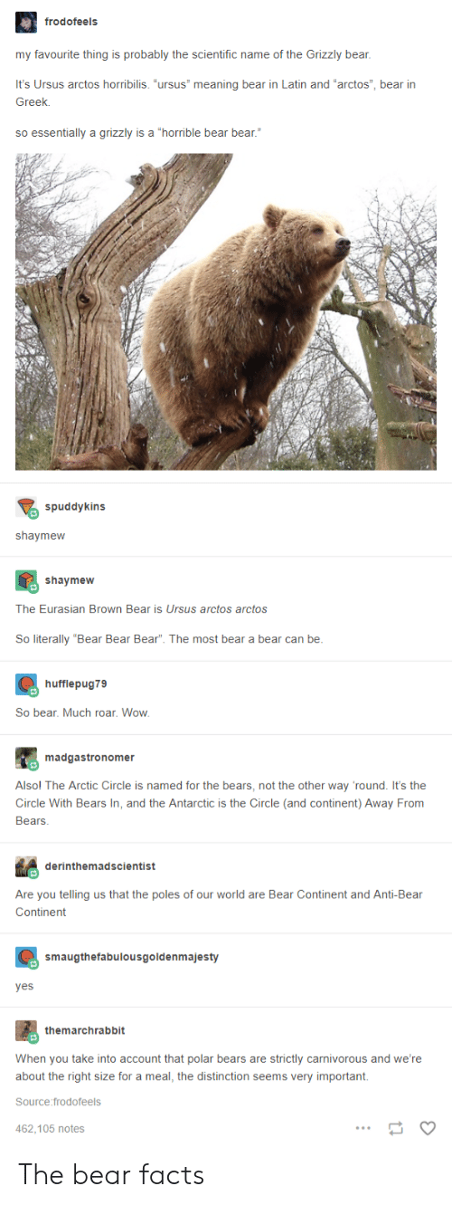 """Facts, Wow, and Bear: frodofeels  my favourite thing is probably the scientific name of the Grizzly bear,  It's Ursus arctos horribilis. """"ursus"""" meaning bear in Latin and """"arctos"""", bear irn  Greek.  so essentially a grizzly is a """"horrible bear bear.""""  spuddykins  shaymeww  shaymew  The Eurasian Brown Bear is Ursus arctos arctos  So literally """"Bear Bear Bear"""". The most bear a bear can be  hufflepug79  So bear. Much roar. Wow  madgastronomer  Alsol The Arctic Circle is named for the bears, not the other way 'round. It's the  Circle With Bears In, and the Antarctic is the Circle (and continent) Away From  Bears  derinthemadscientist  Are you telling us that the poles of our world are Bear Continent and Anti-Bear  Continent  smaugthefabulousgoldenmajesty  yes  themarchrabbit  When you take into account that polar bears are strictly carnivorous and we're  about the right size for a meal, the distinction seems very important.  Source:frodofeels  462.105 notes The bear facts"""