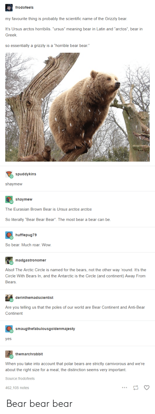 """Wow, Bear, and Bears: frodofeels  my favourite thing is probably the scientific name of the Grizzly bear,  It's Ursus arctos horribilis. """"ursus"""" meaning bear in Latin and """"arctos"""", bear irn  Greek.  so essentially a grizzly is a """"horrible bear bear.""""  spuddykins  shaymeww  shaymew  The Eurasian Brown Bear is Ursus arctos arctos  So literally """"Bear Bear Bear"""". The most bear a bear can be  hufflepug79  So bear. Much roar. Wow  madgastronomer  Alsol The Arctic Circle is named for the bears, not the other way 'round. It's the  Circle With Bears In, and the Antarctic is the Circle (and continent) Away From  Bears  derinthemadscientist  Are you telling us that the poles of our world are Bear Continent and Anti-Bear  Continent  smaugthefabulousgoldenmajesty  yes  themarchrabbit  When you take into account that polar bears are strictly carnivorous and we're  about the right size for a meal, the distinction seems very important.  Source:frodofeels  462.105 notes Bear bear bear"""