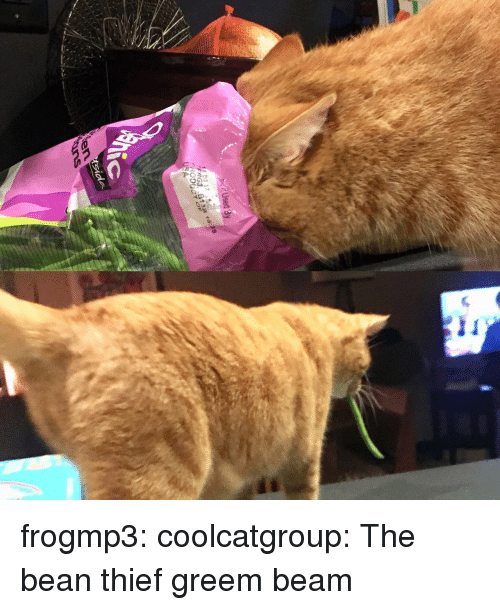 Tumblr, Blog, and Http: frogmp3:  coolcatgroup: The bean thief   greem beam