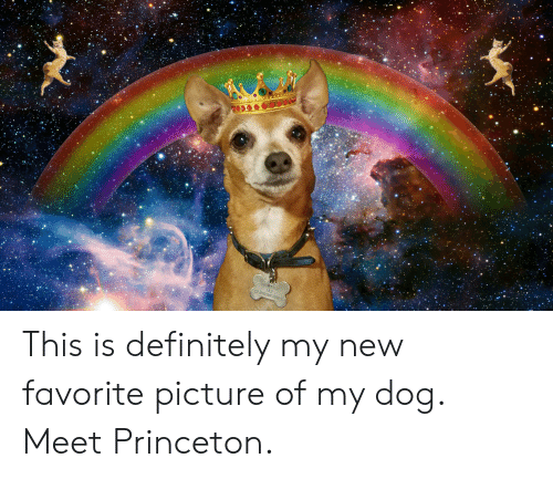 Definitely, Dog, and Princeton: FRTUN  AKA  HANSO NTS This is definitely my new favorite picture of my dog. Meet Princeton.