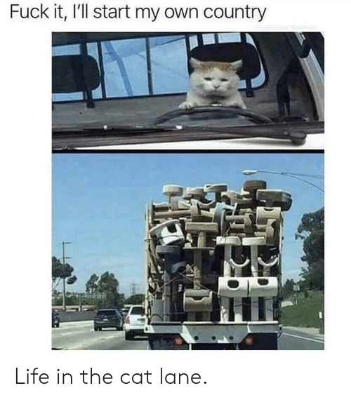 Life, Fuck, and Fuck It: Fuck it, I'll start my own country Life in the cat lane.