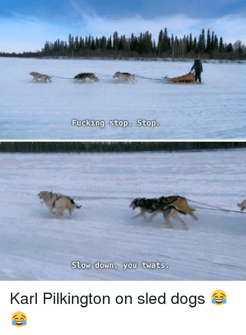 sleds: Fucking stop. Stop  Slow down, you twats Karl Pilkington on sled dogs 😂😂