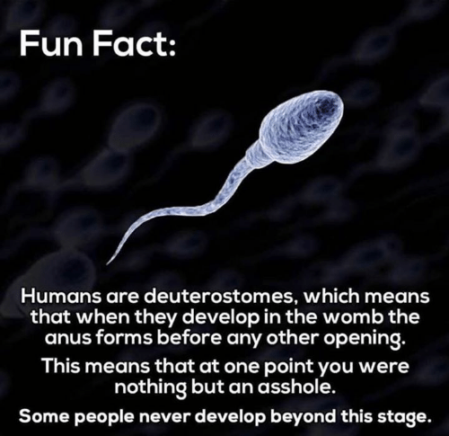 Dank, Never, and Asshole: Fun Fact:  Humans are deuterostomes, which means  that when they develop in the womb the  anus forms before any other opening.  This means that at one point you were  nothing but an asshole.  Some people never develop beyond this stage