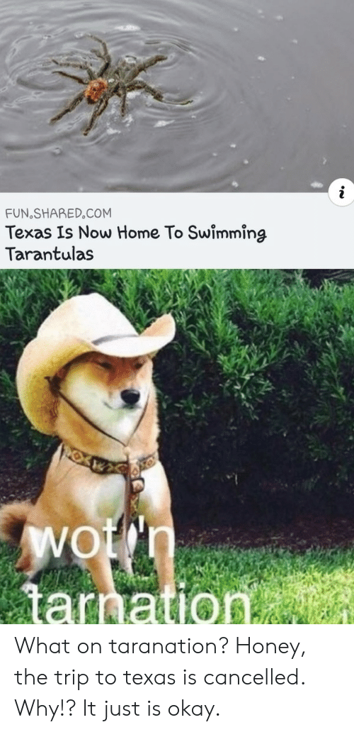 trip: FUN SHARED.COM  Texas Is Now Home To Swimming  Tarantulas  Wotn  tarnation What on taranation? Honey, the trip to texas is cancelled. Why!? It just is okay.