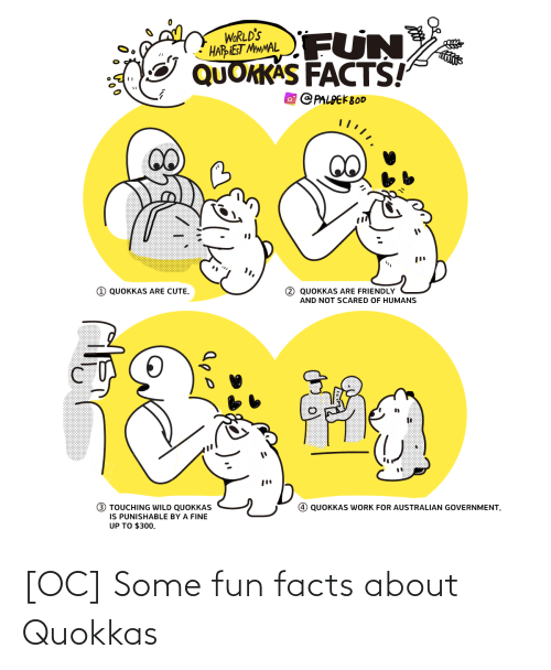 Cute, Facts, and Work: FUN  WORLD'S  HARIEST MMMAL  QUOKKAS FACTS!  O PALPEK800  1 QUOKKAS ARE CUTE.  2 QUOKKAS ARE FRIENDLY  AND NOT SCARED OF HUMANS  (!)  3 TOUCHING WILD QUOKKAS  IS PUNISHABLE BY A FINE  UP TO $300.  QUOKKAS WORK FOR AUSTRALIAN GOVERNMENT. [OC] Some fun facts about Quokkas