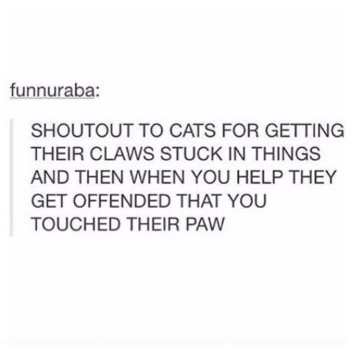 Cats, Help, and Humans of Tumblr: funnuraba:  SHOUTOUT TO CATS FOR GETTING  THEIR CLAWS STUCK IN THINGS  AND THEN WHEN YOU HELP THEY  GET OFFENDED THAT YOU  TOUCHED THEIR PAW