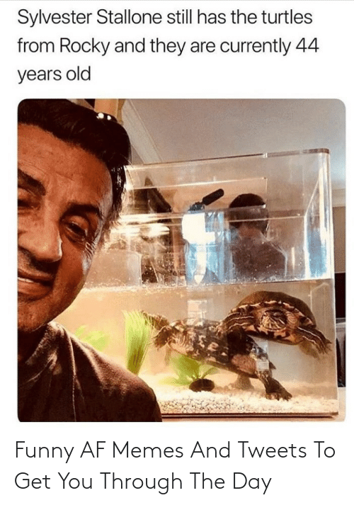 AF: Funny AF Memes And Tweets To Get You Through The Day