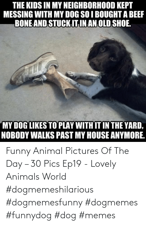 Pictures: Funny Animal Pictures Of The Day – 30 Pics Ep19 - Lovely Animals World #dogmemeshilarious #dogmemesfunny #dogmemes #funnydog #dog #memes