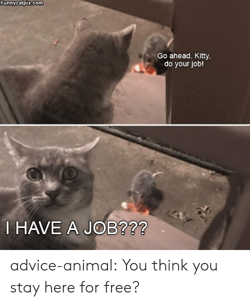 Advice, Tumblr, and Animal: Funnycatpix.com  Go ahead, Kitty  do your job!  HAVE A JOB?72 advice-animal:  You think you stay here for free?