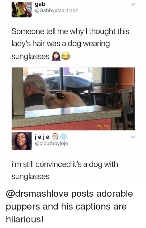Hair, Sunglasses, and Dank Memes: gab  @GabbyyMartinez  Someone tell me why l thought this  lady's hair was a dog wearing  sunglasses fee  서서  @cloutboyjojo  i'm still convinced it's a dog with  sunglasses @drsmashlove posts adorable puppers and his captions are hilarious!