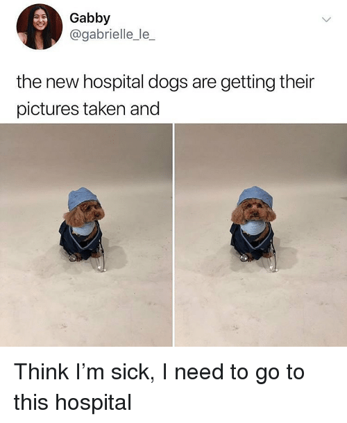 Dogs, Memes, and Taken: Gabby  @gabrielle_le_  the new hospital dogs are getting their  pictures taken and Think I'm sick, I need to go to this hospital