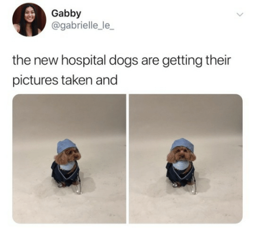 Dogs, Taken, and Hospital: Gabby  @gabrielle_le_  the new hospital dogs are getting their  pictures taken and