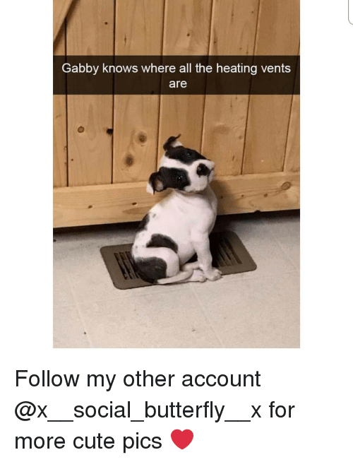 Cute, Memes, and Butterfly: Gabby knows where all the heating vents  are Follow my other account @x__social_butterfly__x for more cute pics ❤
