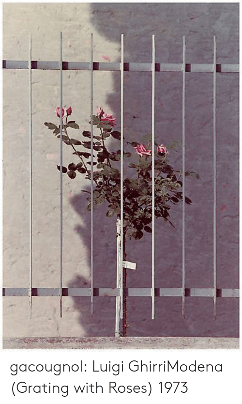 Tumblr, Blog, and Com: gacougnol:  Luigi GhirriModena (Grating with Roses) 1973