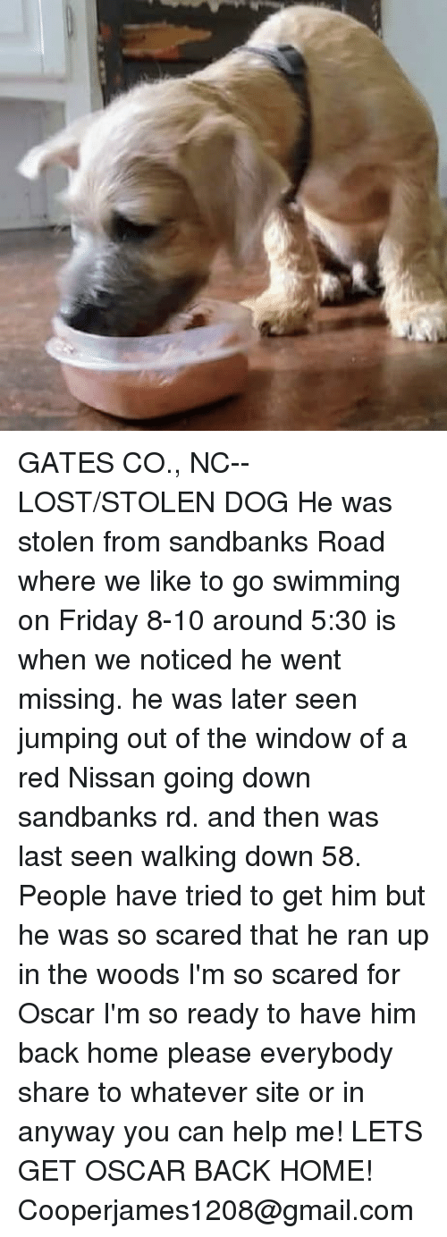 Friday, Memes, and Lost: GATES CO., NC-- LOST/STOLEN DOG  He was stolen from sandbanks Road where we like to go swimming on Friday 8-10 around 5:30 is when we noticed he went missing. he was later seen jumping out of the window of a red Nissan going down sandbanks rd. and then was last seen walking down 58. People have tried to get him but he was so scared that he ran up in the woods I'm so scared for Oscar I'm so ready to have him back home please everybody share to whatever site or in anyway you can help me! LETS GET OSCAR BACK HOME! Cooperjames1208@gmail.com
