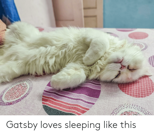 Sleeping, Gatsby, and This: Gatsby loves sleeping like this