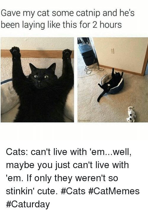 catnip: Gave my cat some catnip and he's  been laying like this for 2 hours Cats: can't live with 'em...well, maybe you just can't live with 'em. If only they weren't so stinkin' cute. #Cats #CatMemes #Caturday