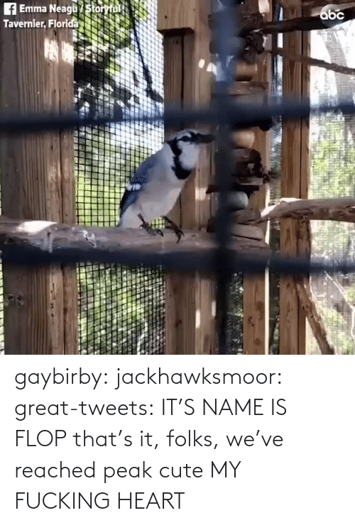 Tweets: gaybirby: jackhawksmoor:  great-tweets:   IT'S NAME IS FLOP  that's it, folks, we've reached peak cute   MY FUCKING HEART