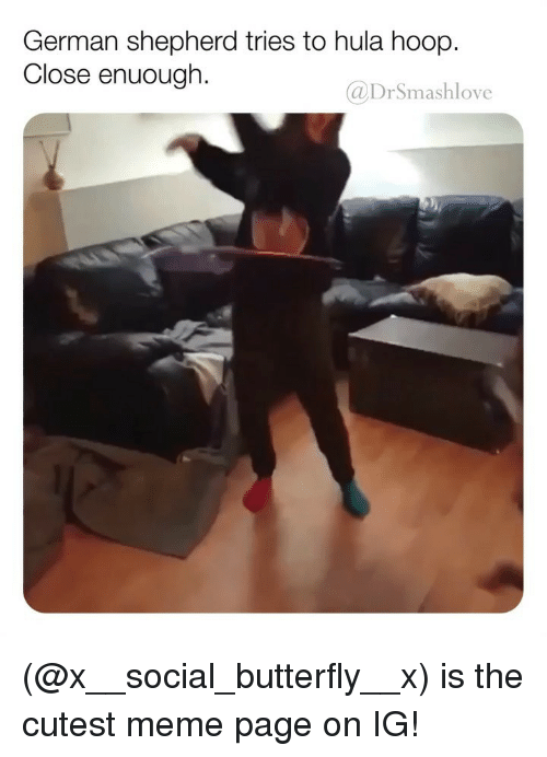 Meme, Memes, and Butterfly: German shepherd tries to hula hoop.  Close enuough.  @DrSmashlove (@x__social_butterfly__x) is the cutest meme page on IG!
