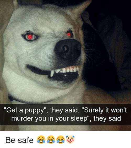 "Memes, Puppy, and Sleep: ""Get a puppy"", they said. ""Surely it won't  murder you in your sleep"", they said Be safe 😂😂😂🤡"