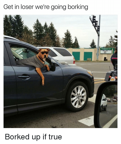 Bork Bork: Get in loser we're going borking Borked up if true