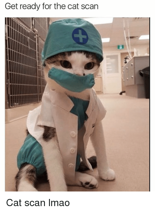 cat scan: Get ready for the cat scan Cat scan lmao