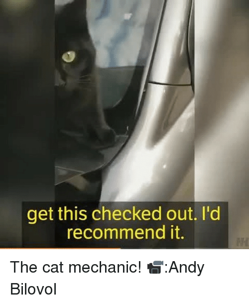 Memes, Mechanic, and 🤖: get this checked out. I'd  recommend it. The cat mechanic! 📹:Andy Bilovol