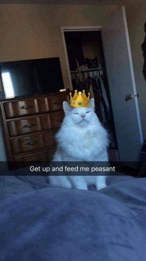 Memes, Peasant, and 🤖: Get up and feed me peasant