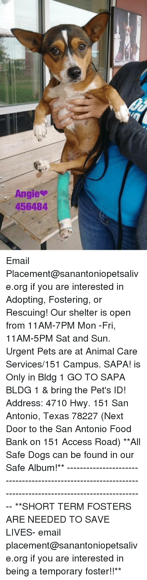 Dogs, Food, and Memes: gie  456484 Email Placement@sanantoniopetsalive.org if you are interested in Adopting, Fostering, or Rescuing!  Our shelter is open from 11AM-7PM Mon -Fri, 11AM-5PM Sat and Sun.  Urgent Pets are at Animal Care Services/151 Campus. SAPA! is Only in Bldg 1 GO TO SAPA BLDG 1 & bring the Pet's ID! Address: 4710 Hwy. 151 San Antonio, Texas 78227 (Next Door to the San Antonio Food Bank on 151 Access Road)  **All Safe Dogs can be found in our Safe Album!** ---------------------------------------------------------------------------------------------------------- **SHORT TERM FOSTERS ARE NEEDED TO SAVE LIVES- email placement@sanantoniopetsalive.org if you are interested in being a temporary foster!!**