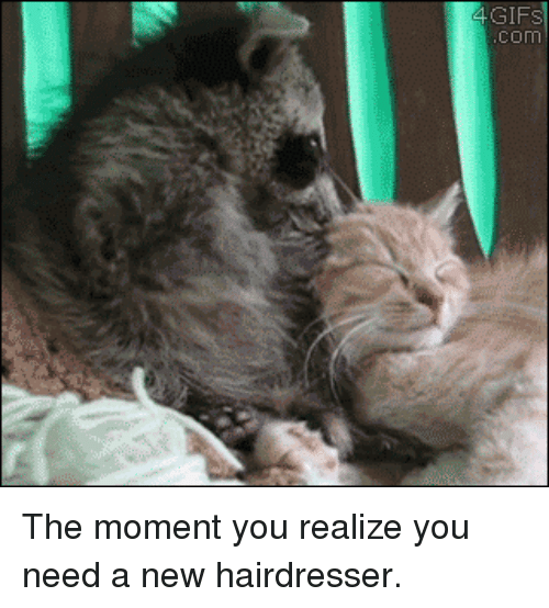 Gif, Com, and Moment: GIF  COM The moment you realize you need a new hairdresser.