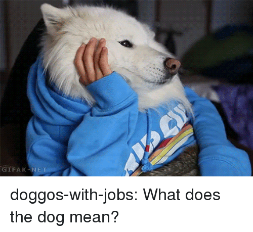 Tumblr, Blog, and Jobs: GIFAK-N doggos-with-jobs:  What does the dog mean?