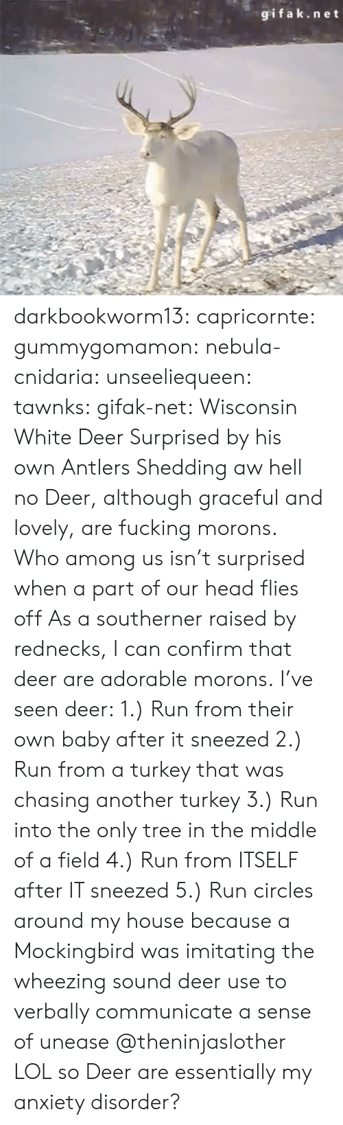 antlers: gifak.net darkbookworm13:  capricornte:  gummygomamon:  nebula-cnidaria:  unseeliequeen:  tawnks:  gifak-net:  Wisconsin White Deer Surprised by his own Antlers Shedding   aw hell no  Deer, although graceful and lovely, are fucking morons.   Who among us isn't surprised when a part of our head flies off   As a southerner raised by rednecks, I can confirm that deer are adorable morons. I've seen deer: 1.) Run from their own baby after it sneezed 2.) Run from a turkey that was chasing another turkey 3.) Run into the only tree in the middle of a field 4.) Run from ITSELF after IT sneezed 5.) Run circles around my house because a Mockingbird was imitating the  wheezing sound deer use to verbally communicate a sense of unease   @theninjaslother  LOL so Deer are essentially my anxiety disorder?