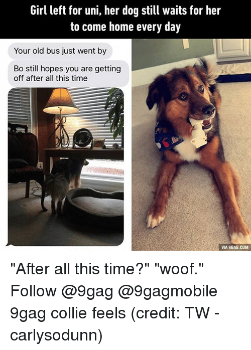 """Girl Left: Girl left for uni, her dog still waits for her  to come home every day  Your old bus just went by  Bo still hopes you are getting  off after all this time  VIA 9GAG.COM """"After all this time?"""" """"woof."""" Follow @9gag @9gagmobile 9gag collie feels (credit: TW - carlysodunn)"""