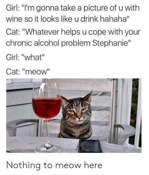 """Wine, Alcohol, and Girl: Girl: """"l'm gonna take a picture of u with  wine so it looks like u drink hahaha""""  Cat: """"Whatever helps u cope with your  chronic alcohol problem Stephanie""""  Girl: """"what""""  Cat: """"meow"""" Nothing to meow here"""